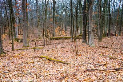 Fallen Tree, Washington Crossing State Park, New Jersey