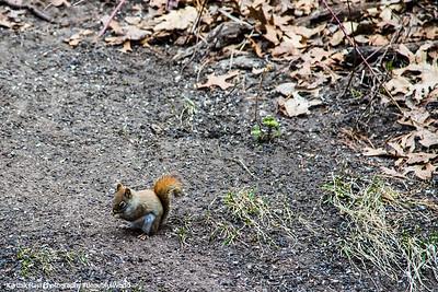 Squirrel, Indiana Dunes National Lakeshore, Indiana