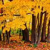 Fall Colors, Bald Eagle State Park, Pennsylvania