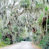 Spanish Moss, Savannah National Wildlife Refuge