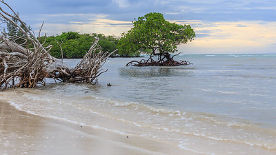 Mangroves by the sea