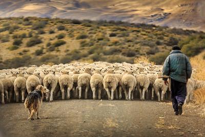 Schafe und Gouchos auf kargem Land
