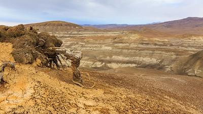 Pfalnzenreste Bosque Petrificado La Leona (Versteinerter Wald, Petrified Forest)