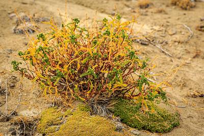 lecho Rastrero im Bosque Petrificado La Leona (Versteinerter Wald, Petrified Forest)