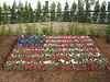 Flower Flag at Rose Hills Memorial Park during the display of the Dignity Memorial Vietnam Veteran Wall