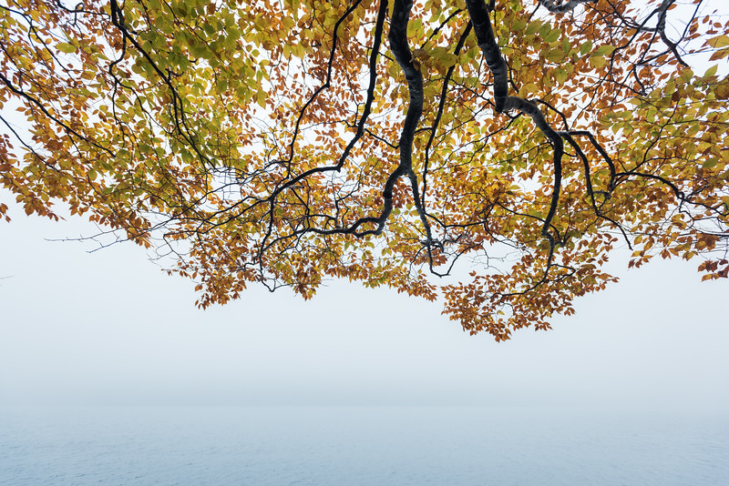 Fog on Jordon Pond, framed by fall foliage in Acadia National Park, ME
