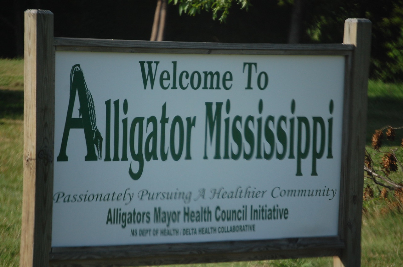 AlligatorMS