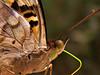 Butterfly, Iguazu