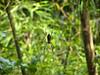 Spider, Iguazu