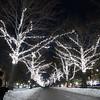 Christmas lights along Commonwealth Avenue Mall