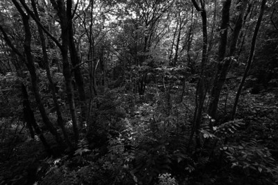 Exploring the Rainforest (Mono)