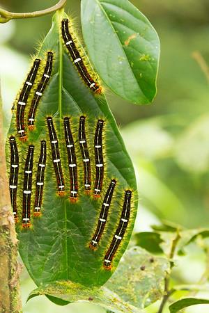 A Caterpillar Car Park