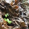 Copal Waterfall - Plant closeup