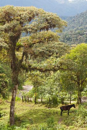 Bellavista Cloud Forest Scenery