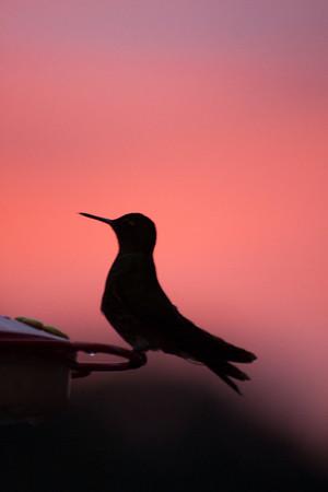 Hummingbird in shadow