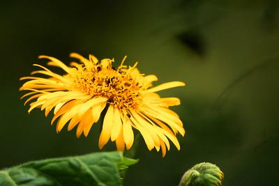 Flower, Bellavista Cloud Forest