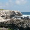 "Punta Suarez, Española, <a target=""NEWWIN"" href=""http://en.wikipedia.org/wiki/Gal%C3%A1pagos_Islands"">Galápagos Islands</a>"