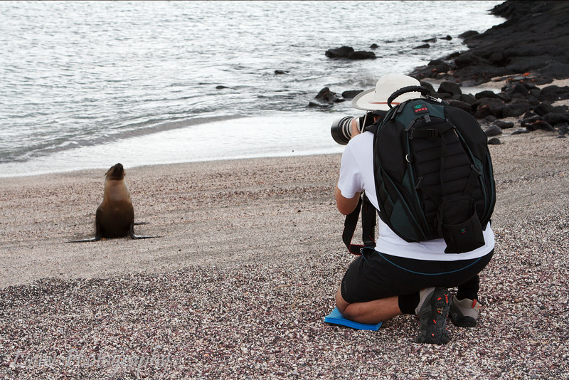 "Punta Espinoza, Fernandina, <a target=""NEWWIN"" href=""http://en.wikipedia.org/wiki/Gal%C3%A1pagos_Islands"">Galápagos Islands</a>"