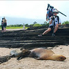 "Watching a young sea lion nurse, Puerto Egas, Santiago, <a target=""NEWWIN"" href=""http://en.wikipedia.org/wiki/Gal%C3%A1pagos_Islands"">Galápagos Islands</a>"