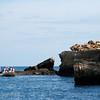 "Panga ride at Tagus Cove, Isabela, <a target=""NEWWIN"" href=""http://en.wikipedia.org/wiki/Gal%C3%A1pagos_Islands"">Galápagos Islands</a>"