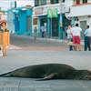 "<a target=""NEWWIN"" href=""http://en.wikipedia.org/wiki/California_Sea_Lion"">Sea lion (<i>Zalophus californianus</i>)</a>, San Cristóbal, <a target=""NEWWIN"" href=""http://en.wikipedia.org/wiki/Gal%C3%A1pagos_Islands"">Galápagos Islands</a>"