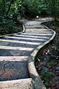 Path with stairs in jungle forest.