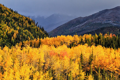 Fall in Denali National Park, AK