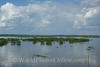 Amazonian Horizon surrounding Iquitos