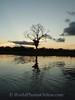 Amazon River - Sunset 4