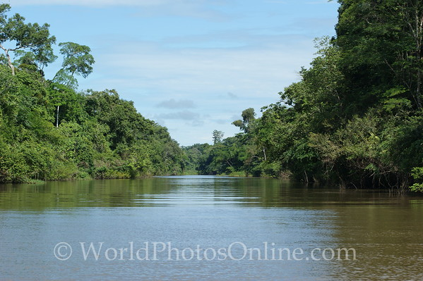 Amazon River - Tributary Scene 5