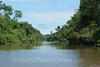 Amazon River - Tributary Scene 5