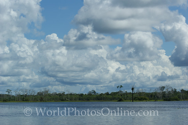 Amazon River - Tributary Scene 7