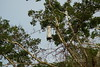 Amazon River - Wasp Nest