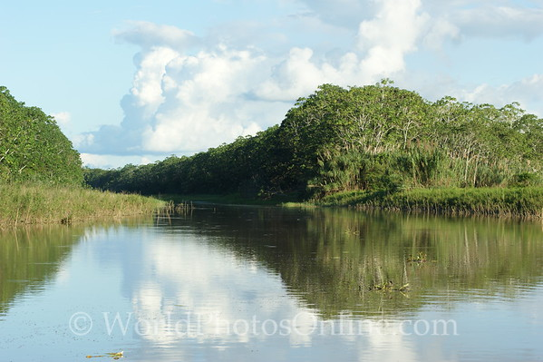 Amazon River - Black Water Stream 2