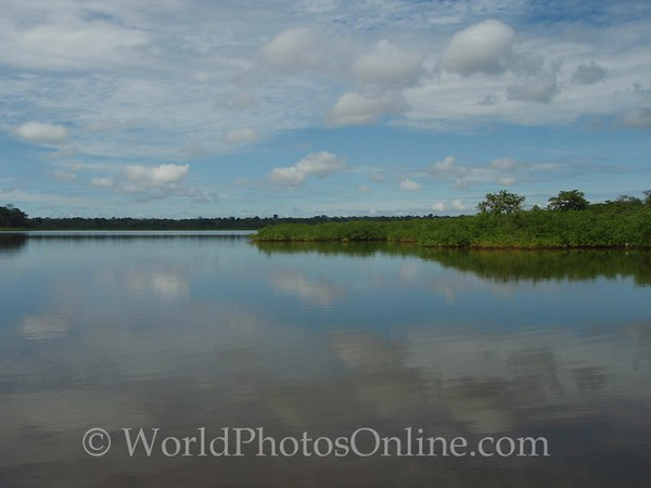 Amazon River - Alligator Lake
