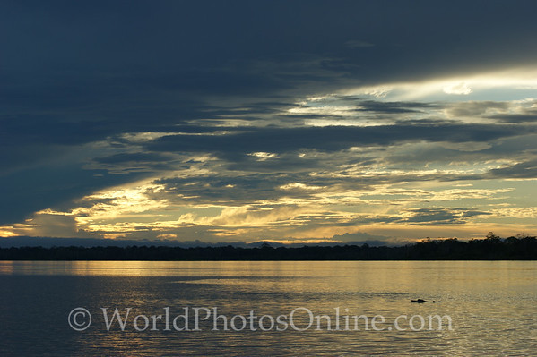 Amazon River - Sunset with Pink Dolphins
