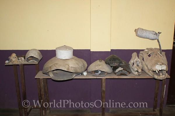Amazon River - Ranger Station - Creature Gallery