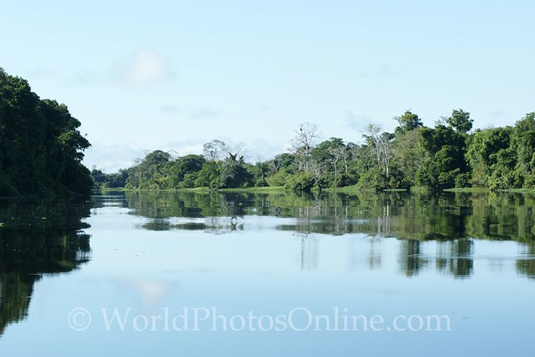 Amazon River - Tributary Scene 3