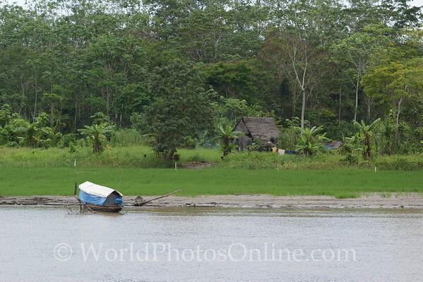 Amazon River - Homestead 1