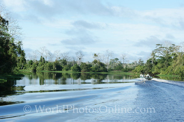 Amazon River - Tributary Scene 2 with skiff