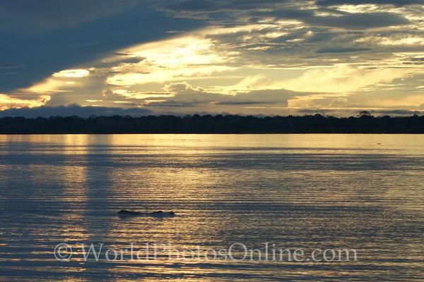 Amazon River - Sunset with Pink Dolphin