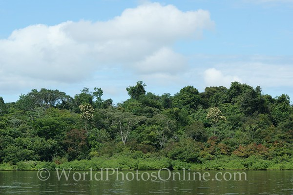 Amazon River - Tributary Scene 6