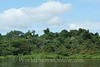 Amazon River - Tributary Scene 6
