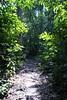 Amazon River - Terra Firma Forest Walk 1