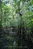 Amazon River - Forest Walk