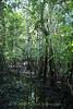 Amazon River - Forest Walk