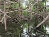 Amazon River - Tributary Scene 4