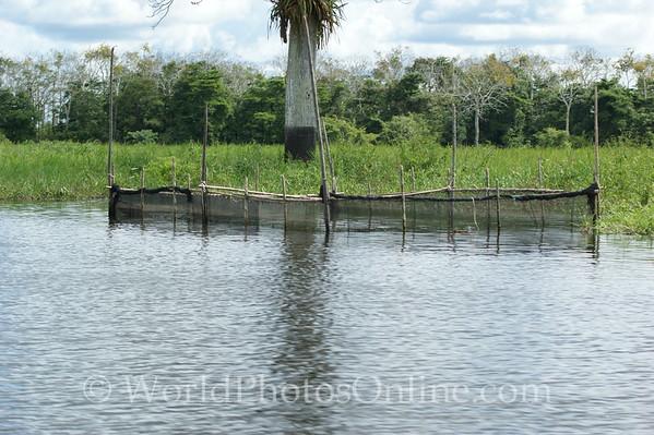 Amazon River - Tributary Scene - Fish Trap