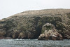 Ballestas Islands - Birds 2