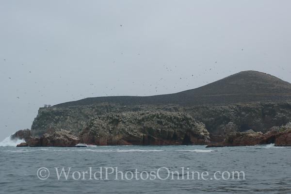 Ballestas Islands - Cormorants covering island